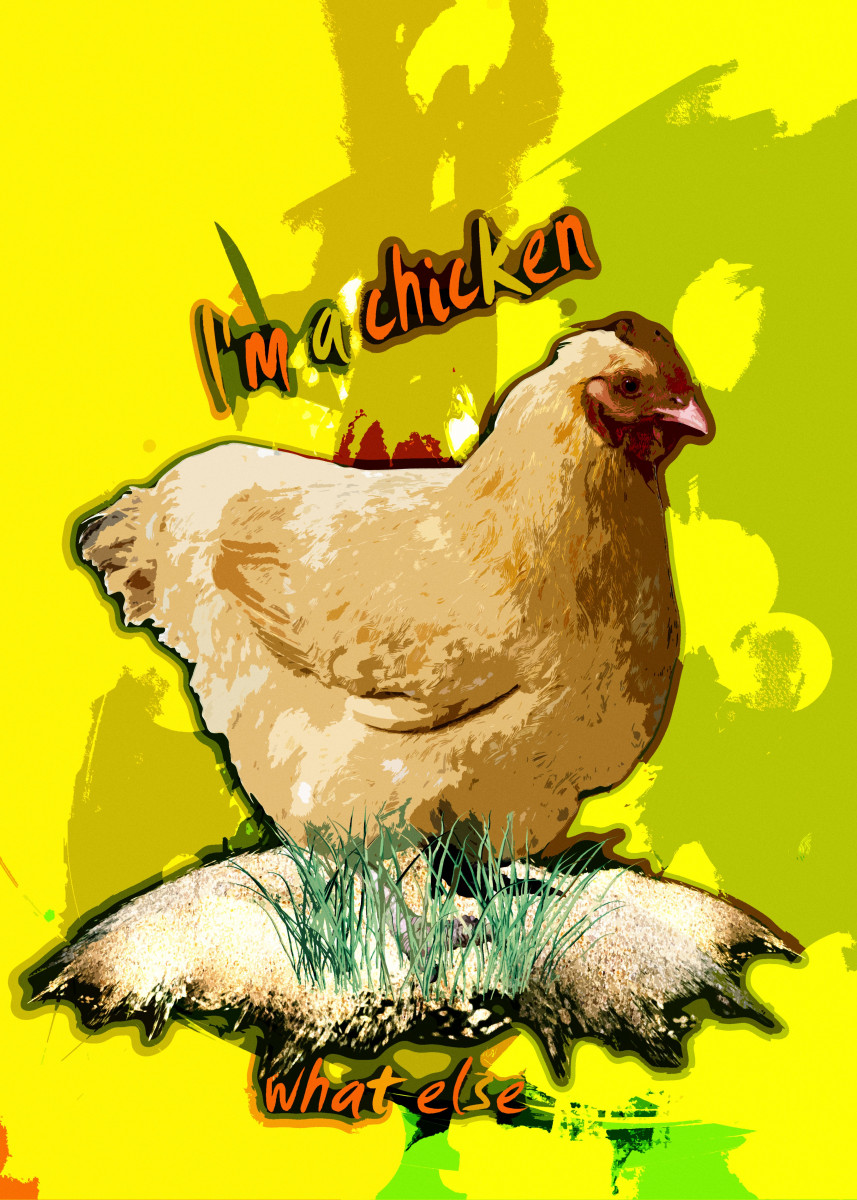 I'm a chicken....what else