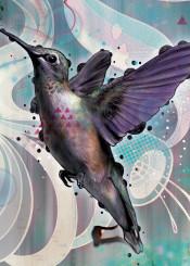hummingbird bird animals flying wings blue drawing