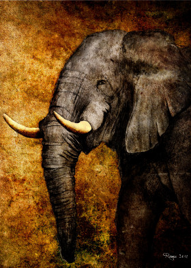 elephant the wild roma digital paint from sketch rough yellow sepia wisdom