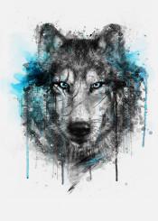 wolf splash watercolors digital illustration winter black blue