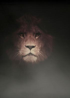 lion cat warrior dark black gothic dangerous intense portrait africa wild men man gift office tiger