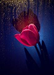 flower tulip drops water spring light shadow shining macro petals pink rain sun
