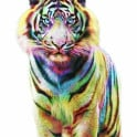 The colorful tiger.