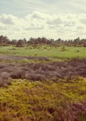 photography coast meadow nature