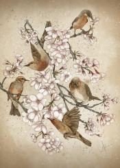 birds sakura flowers nature