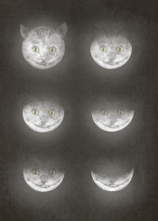 moon cycle cat aliceinwonderland surreal cheshire
