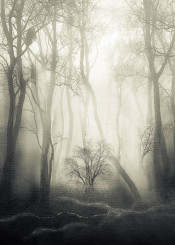 landscape trees forest foggy fog sunset sunrise textures fineart mixedmedia