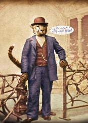 vintage animals cats kitties humor love