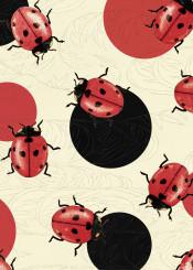 polka dot ladybug ladybird