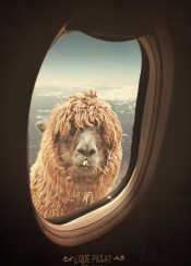 lama travel holiday airplane funny humor fun sky men gift office vintage never stop exploring clouds