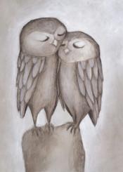 owl love tender sensations