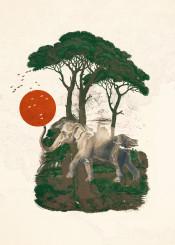 elephant savana sunrise