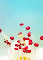 blossom flower macro abstract blue red detail stamen sharon jonhstone photography