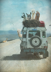 travel outdoor adventure holidays southamerica peru chile lama car jeep landrover explore quote