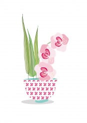 flower orchid pink floral pretty fun cute
