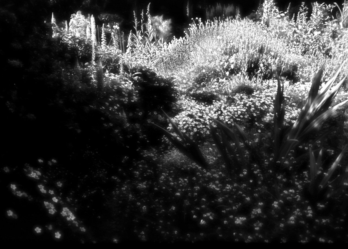 Garden in Infra Red 36746
