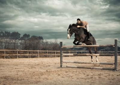 Valeria Cardinale Horses   Displate Prints on Steel