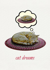 cats pets animals dreams sleep humor funny