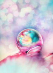 flower petal water drop pretty colourful fun