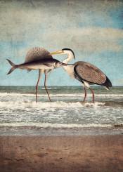 seaside surreal concept fish bird sea ocean