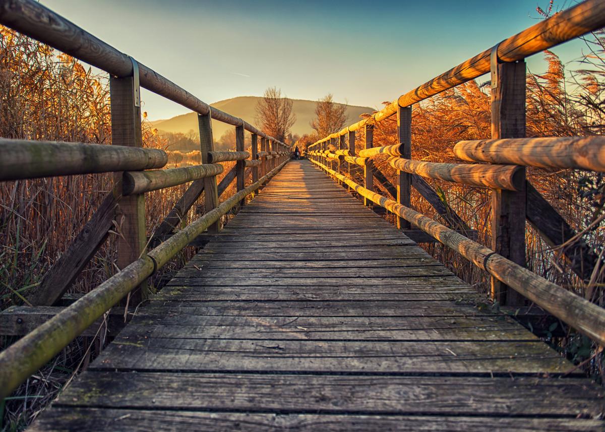 Wood bridge on lake