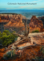 colorado national monument cliff dead tree dramatic landscape colorado butte nature
