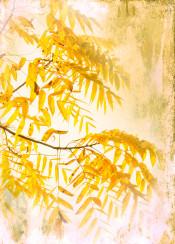 yellow foliage vintage photograph dreamy autumn seasonal nature flora landscape