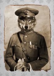 wolf vintage photo