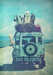 outdoor travel adventure funny humor lama jeep landrover hilarious landscape vintage