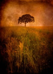 tree landscape field red sunset meadow grass sky horizon