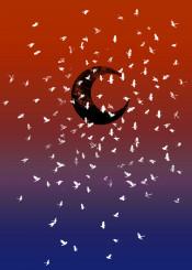 space moon birds art colors