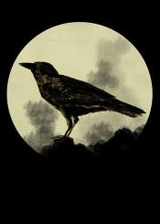 crow black bird raven night dark wicca celtic gothic