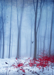 winter snow nood atmosphere cold trees forest mystical leaves red light blue birds abstraction
