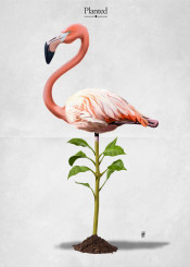 bird flamingo pink plant green stand planted leaves feather