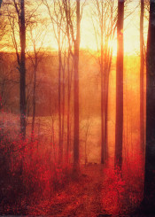 backlight sunrise forest red leaves mystical atmosphere texture nature