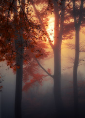 misty moody dreamy leaves trees nature backlight mystery fog trees forest glow fall