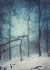 forest mood snow winter cold birds trees texture fog haze atmosphere