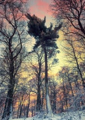 winter hill trees snow evening sunset painterly textures impressionistic atmosphere mood