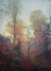 fall forest mood november trees painterly valley colors leaves