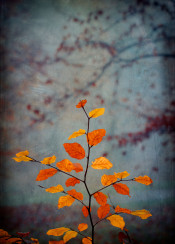 colors fall autumn dof closeup leaves composition impressionistic painterly misty moody