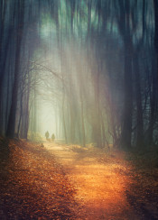 light mist haze forest people manipulation abstraction trees blur path silhouettes light shadows