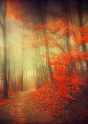 fall colors forest leaves mood mystery orange path atmosphere painterly silhouettes