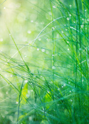 light grass green bokeh leaf water drops thaw fresh spring textures