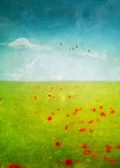 poppies red green blue abstraction rural field birds landscape soft spring vivid