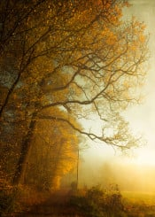 fall haze gold light trees vintage textures leaves season road forest