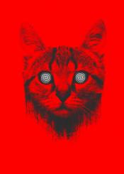 cat unique modern hypnotize eyes animal cute red