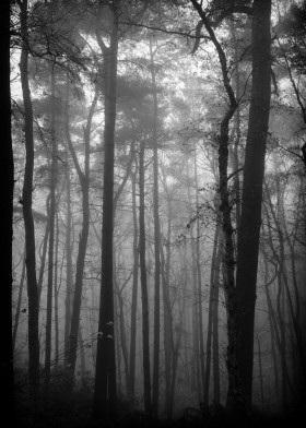 aspley wood trees woods england winter fog mist bw