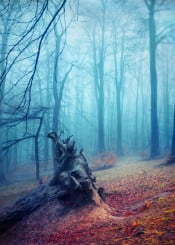 forest mist fall silhouettes textures blue red leaves mood atmosphere nature trees