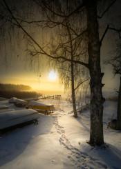 winter winter scenery winter landscape landscape landscapes pier wodden pier snow sun sunlight mist
