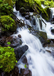 oregon waterfall cascade moss mossy river